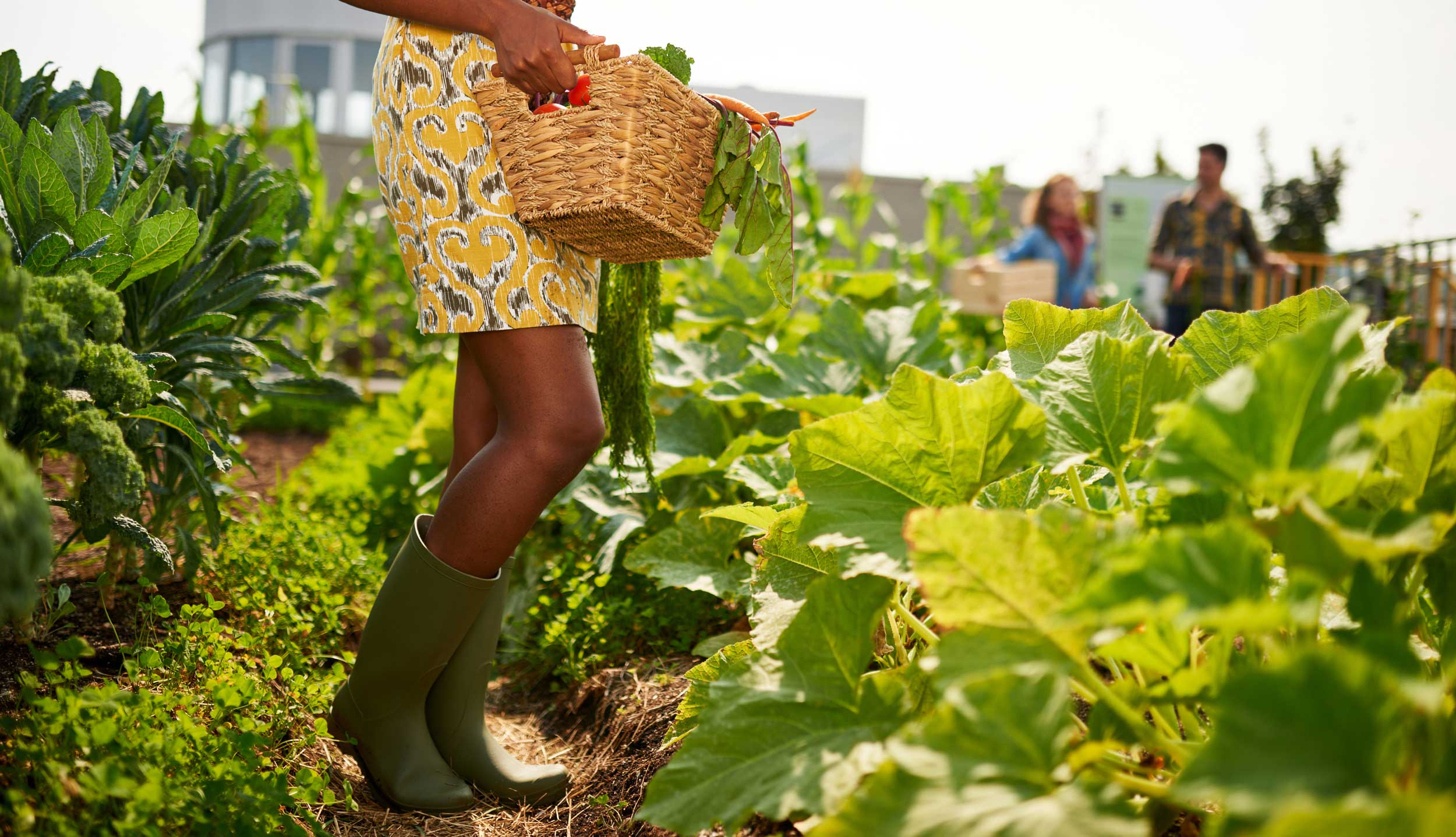 Young woman holds a basket full of vegetables in a community vegetable garden.