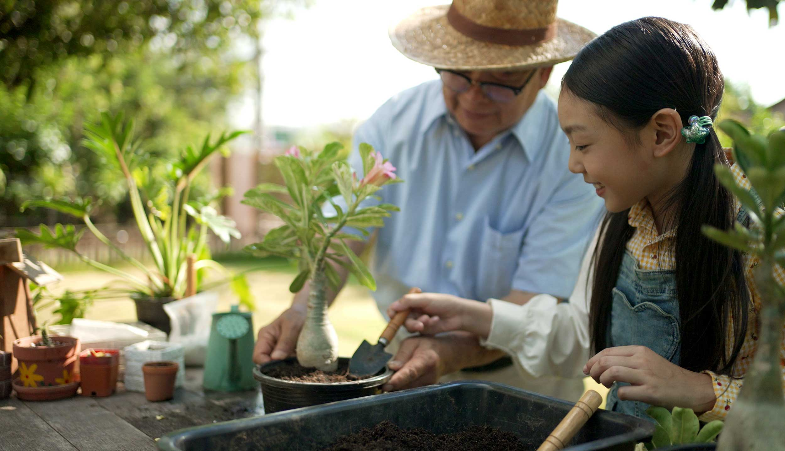 An Asian grandfather and his granddaughter pot plants together.